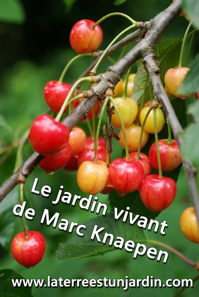 Jardin de Marc Knaepen