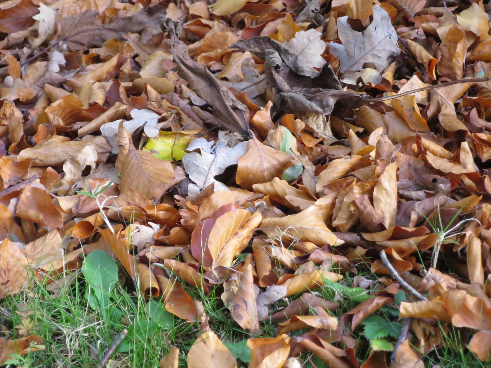 Mulch feuilles mortes