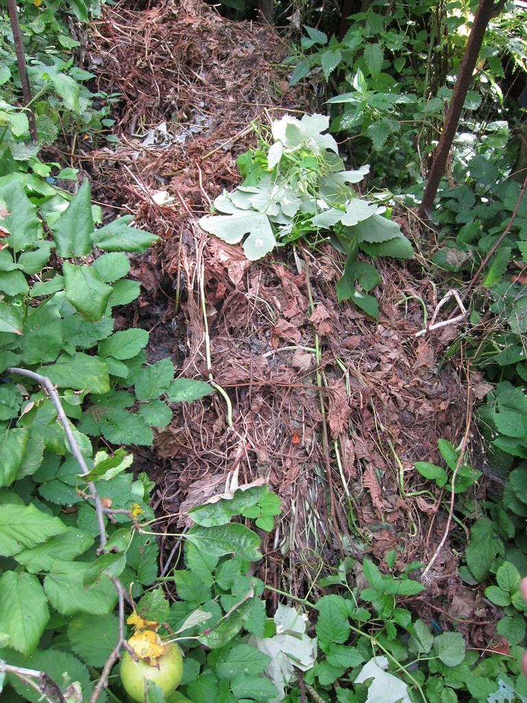 Mulch forêt