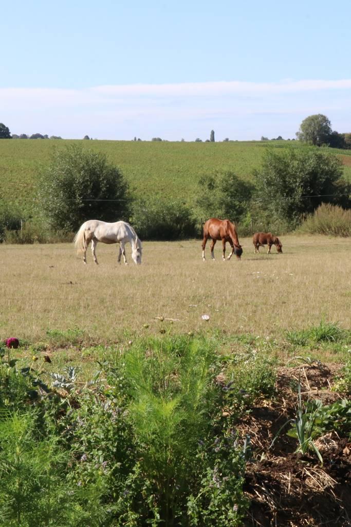 Prairie de la Marache