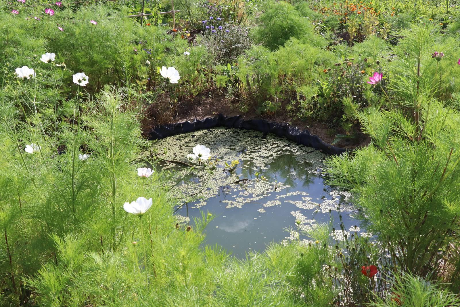 Bassin Potager de la Marache