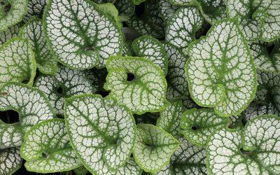 Guide des plantes couvre-sol