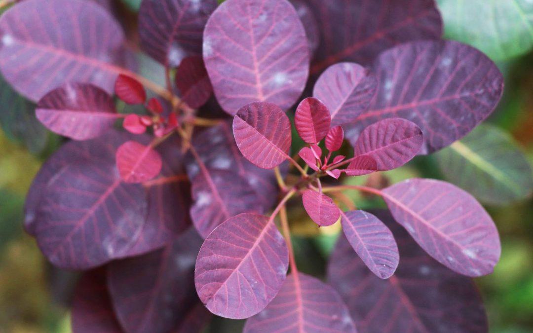 Guide des plantes du jardin qui résistent à la sécheresse