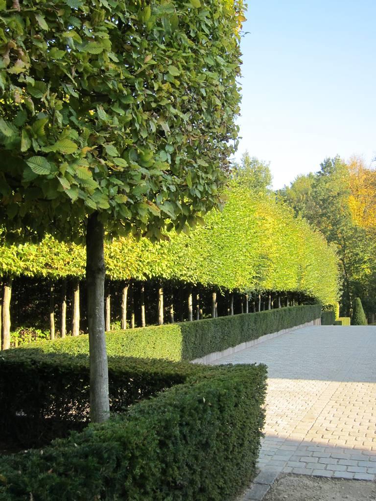 Jardin d'architecte