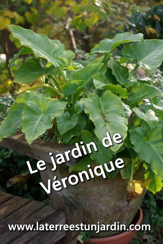 Jardin de Véronique