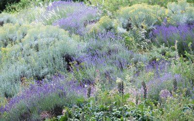 Guide des plantes de rocaille