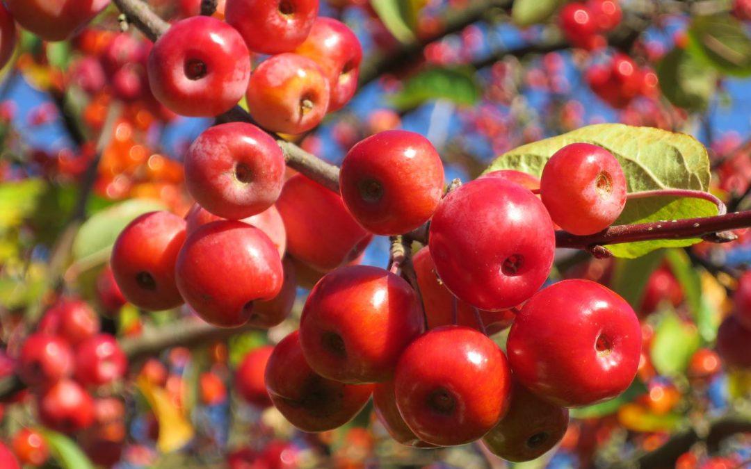 Baies et petits fruits d'automne