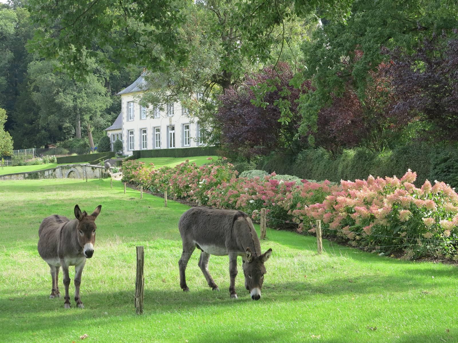 Jardin Abbaye d'Aywiers (2)
