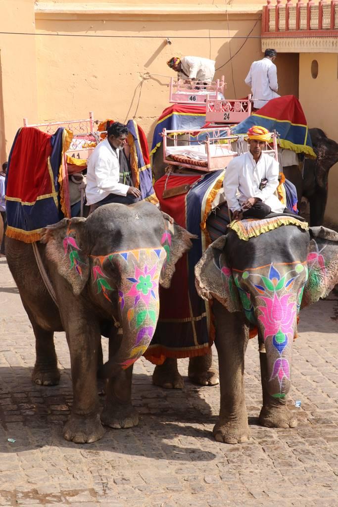 Rajasthan Jaipur (2)