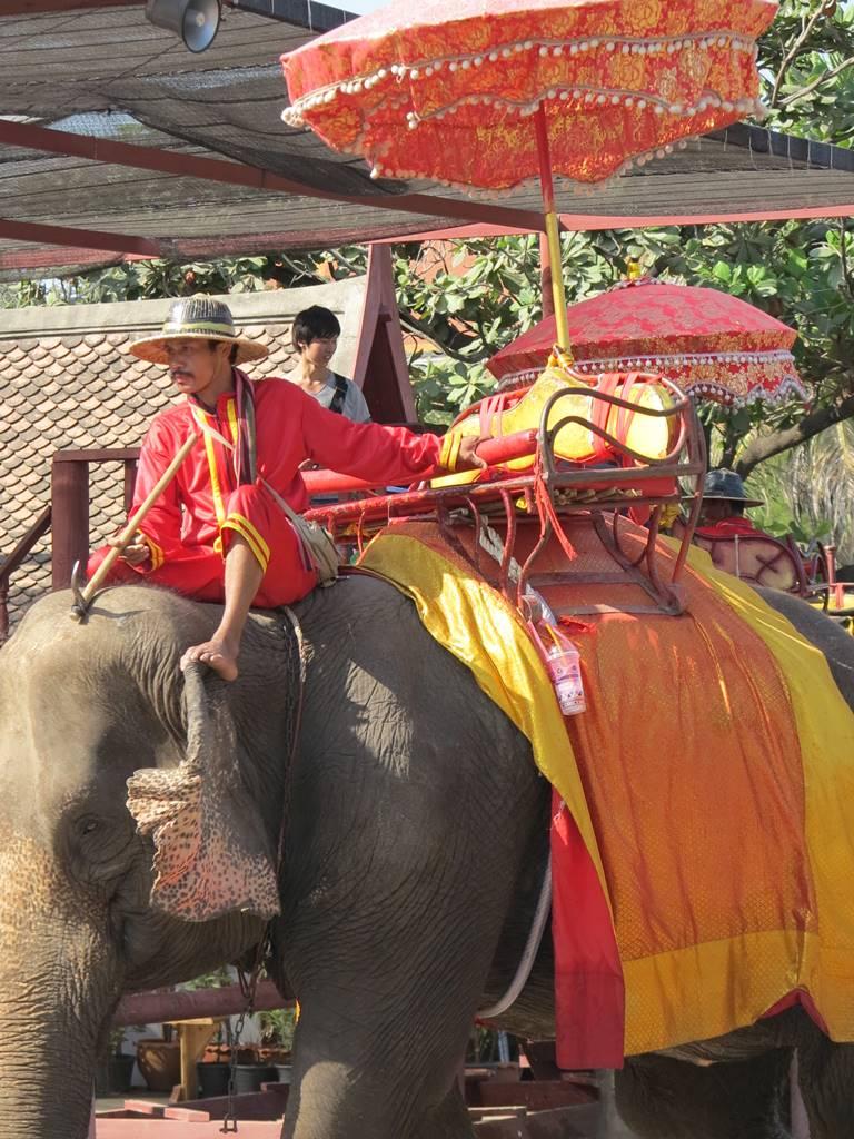 Ayutthaya conservatoire des éléphants (2)
