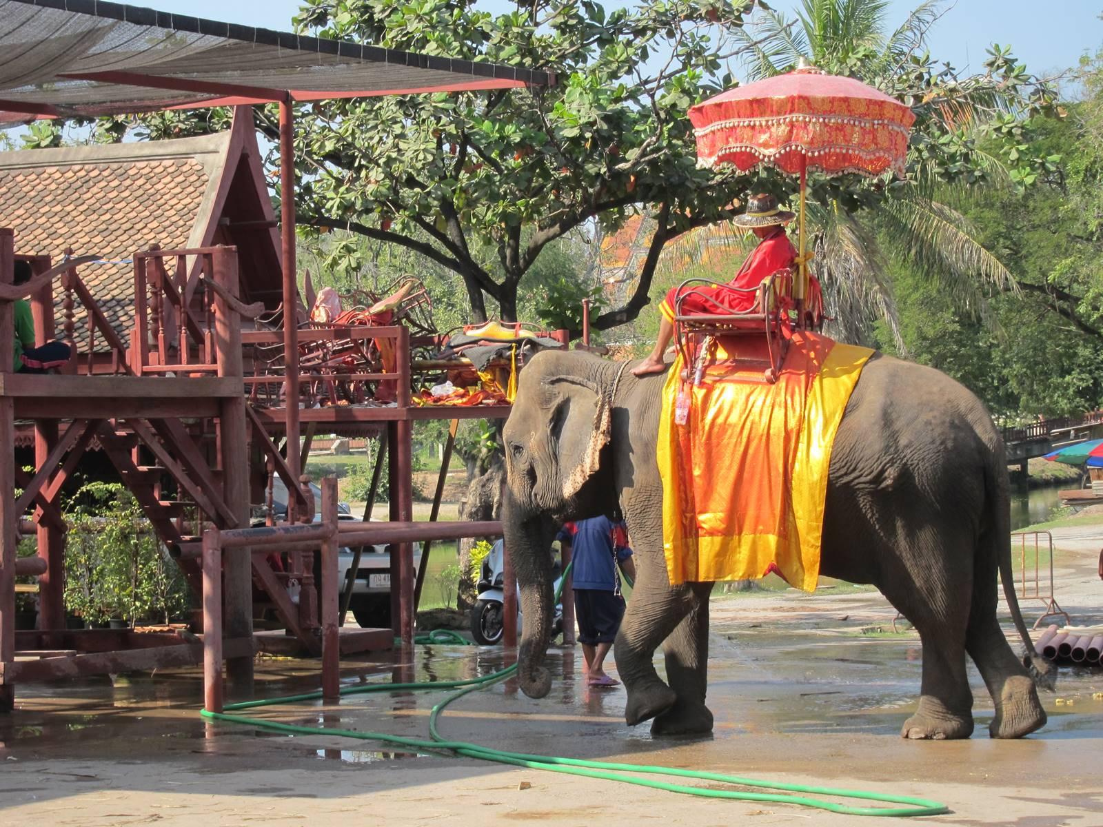 Ayutthaya conservatoire des éléphants (5)