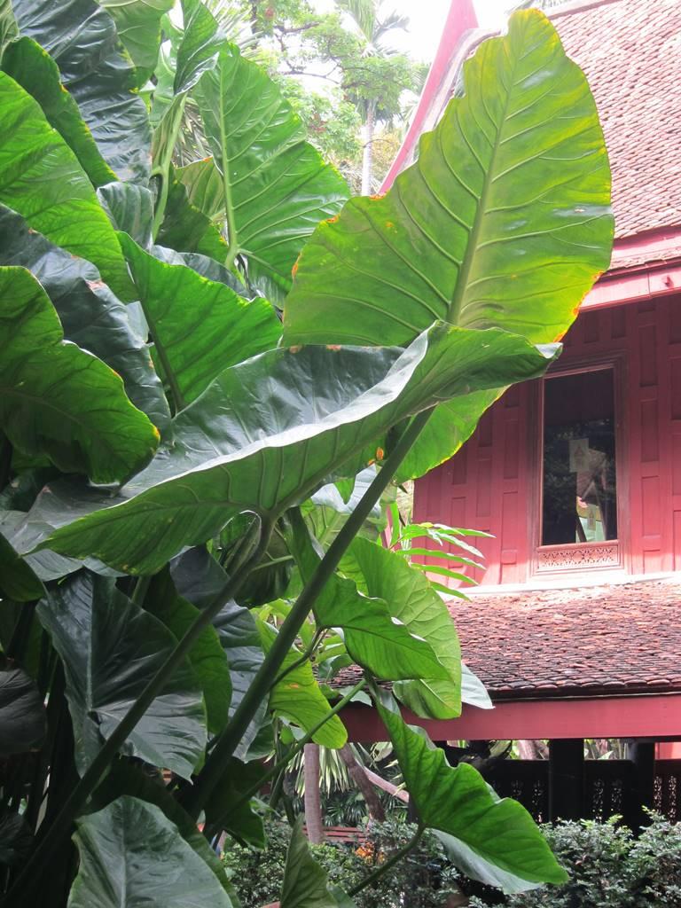 Bangkok 7 Jim Thompson's House (4)