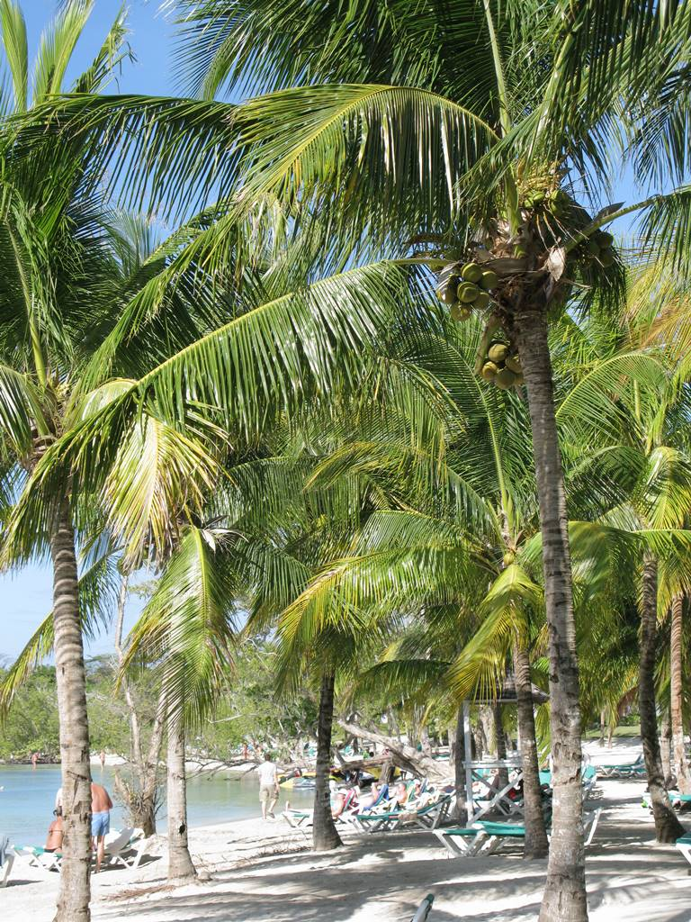 Jamaique Caraibes (19)
