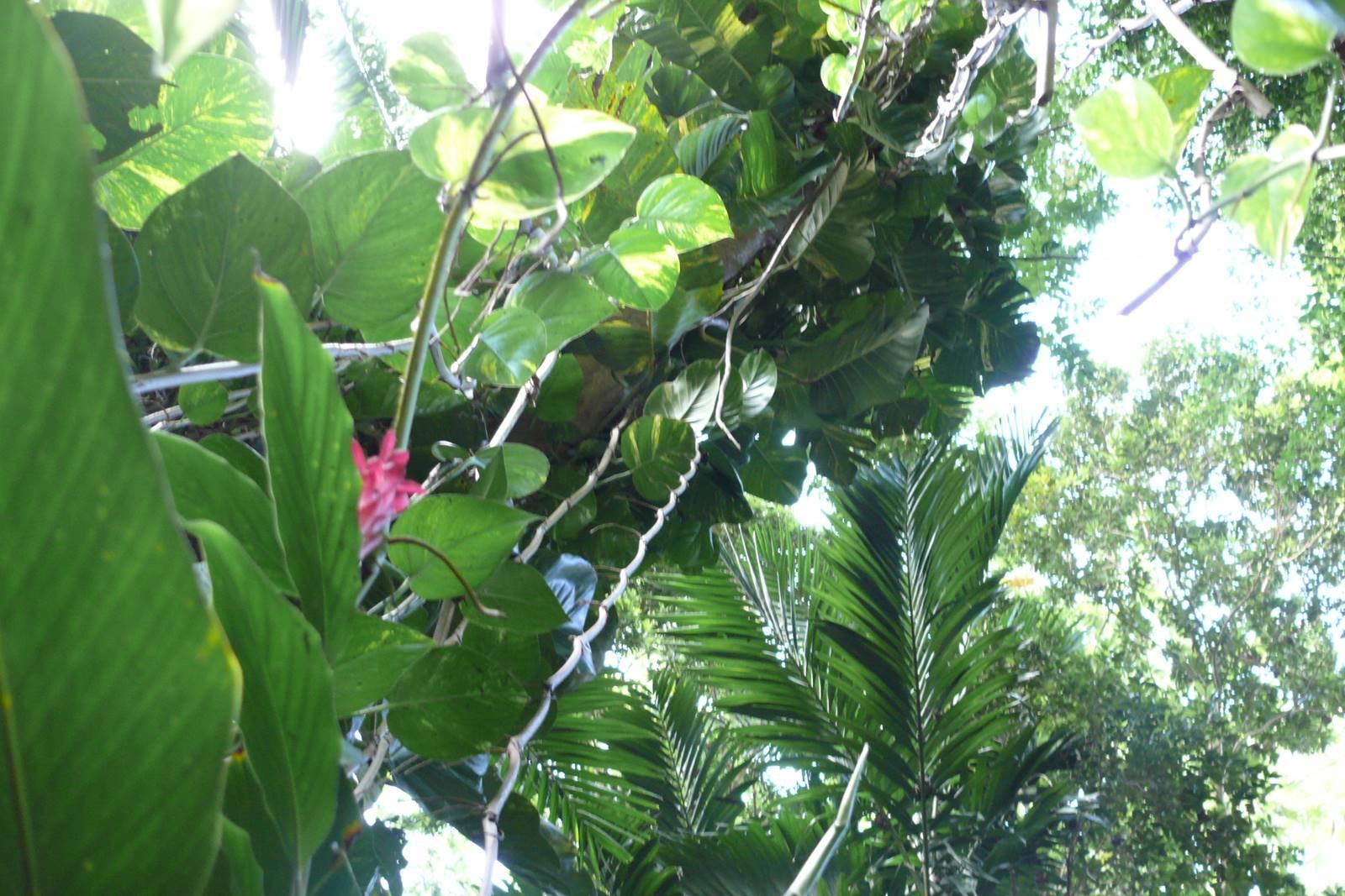 Jamaique Caraibes (45)