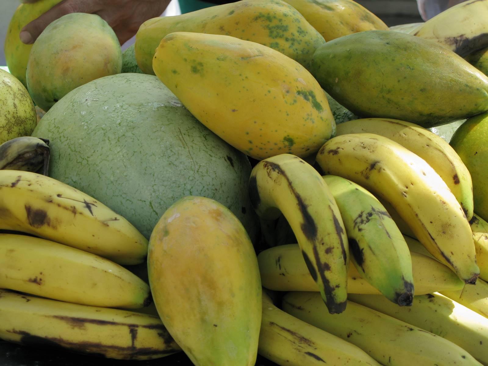 Jamaique Caraibes (5)