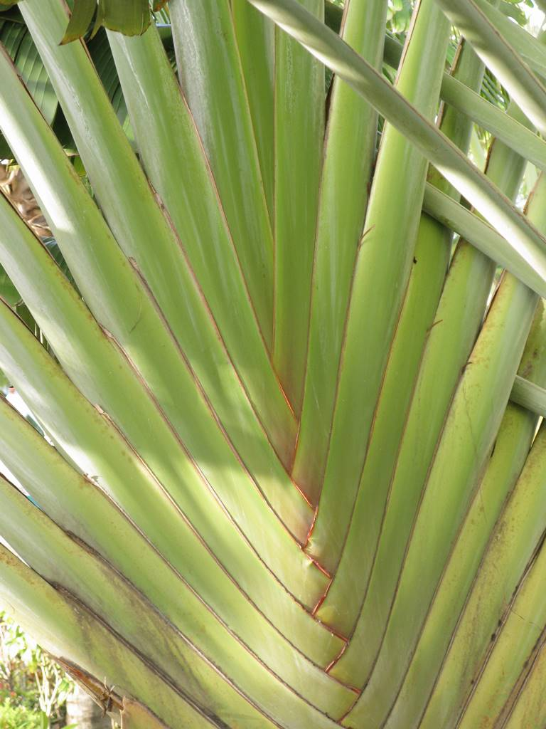 Jamaique Caraibes (7)