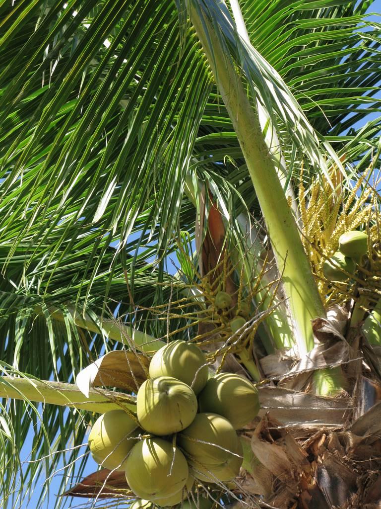 Jamaique Caraibes (8)