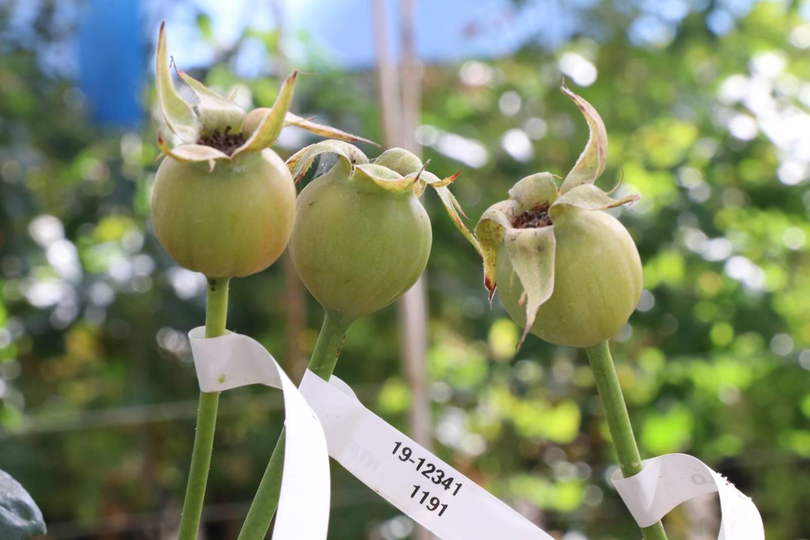 5. fleur fécondée