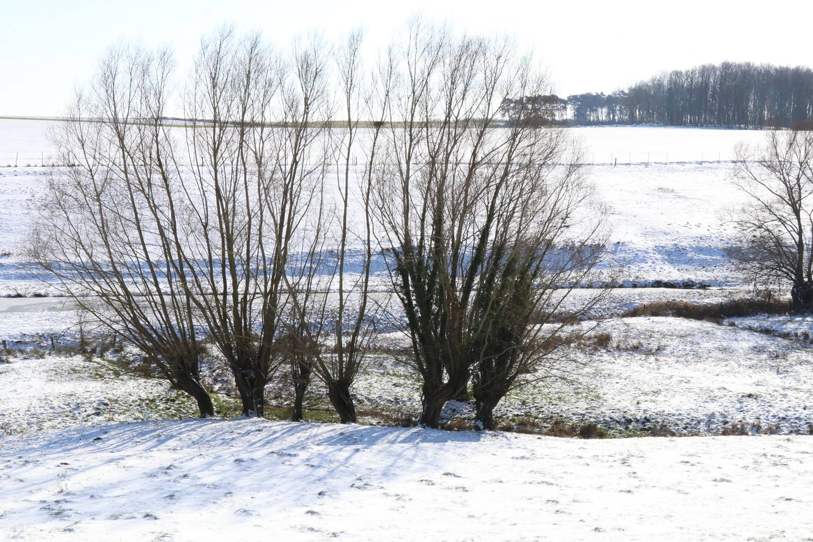 Brabant wallon en hiver (3)
