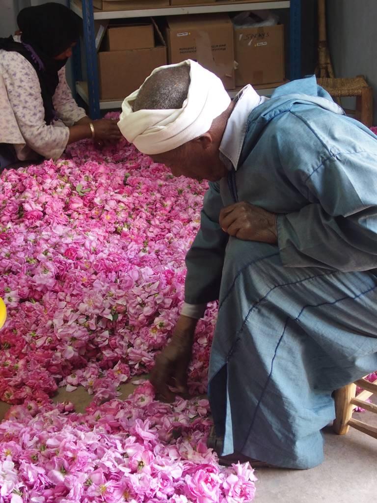 Rose de Damas Maroc