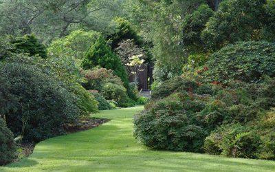Arduaine Gardens, rhododendrons et azalées