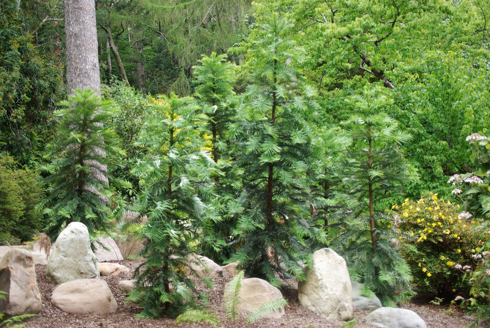 Inverewe Garden Scotland (16)