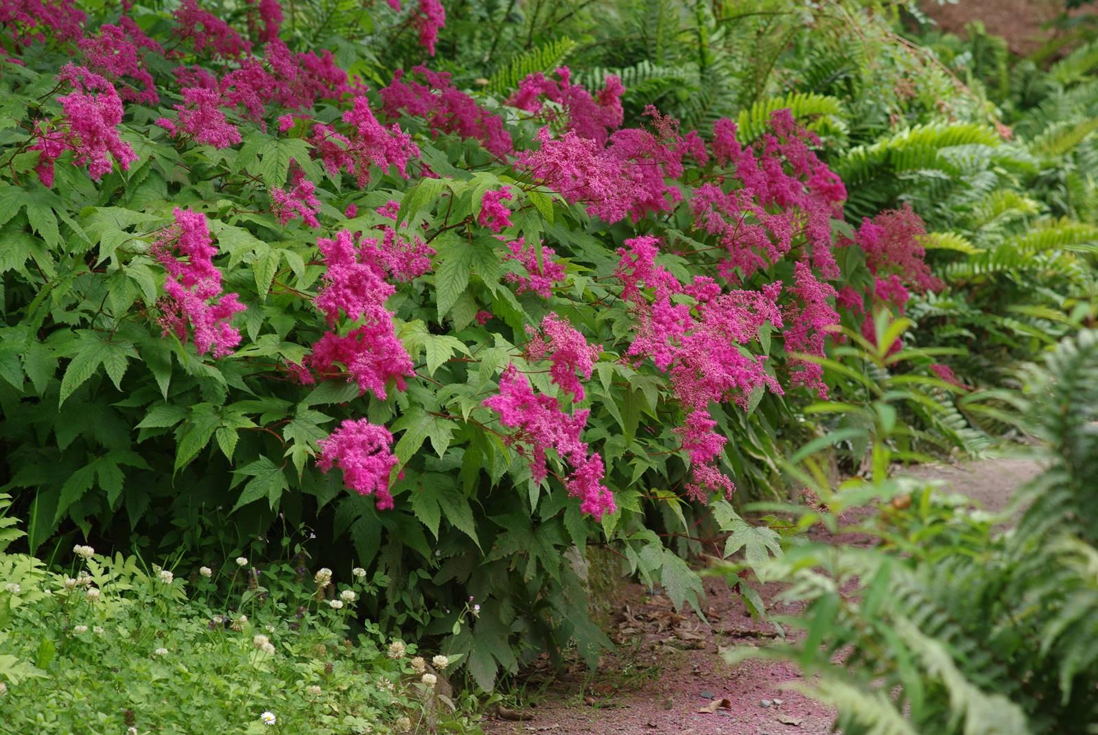 Inverewe Garden Scotland (23)