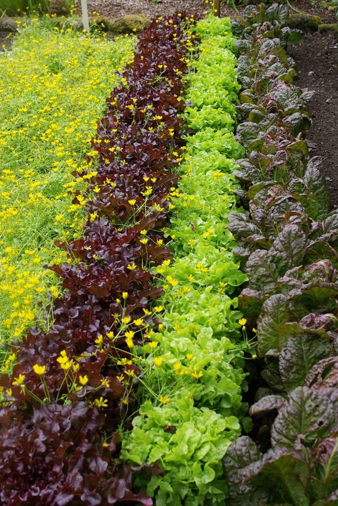 Inverewe Garden Scotland (8)