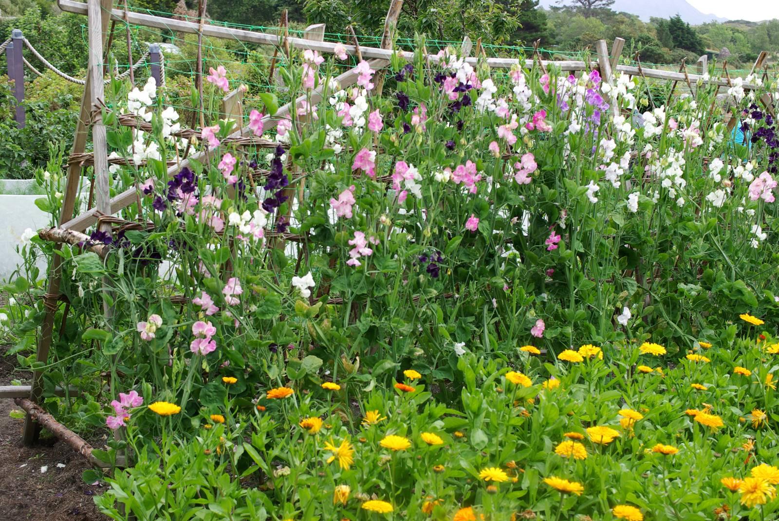 Inverewe Garden Scotland (9)