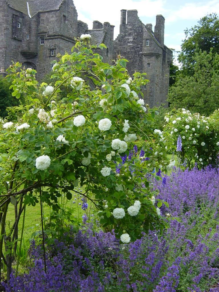 Kellie Garden Scotland (11)
