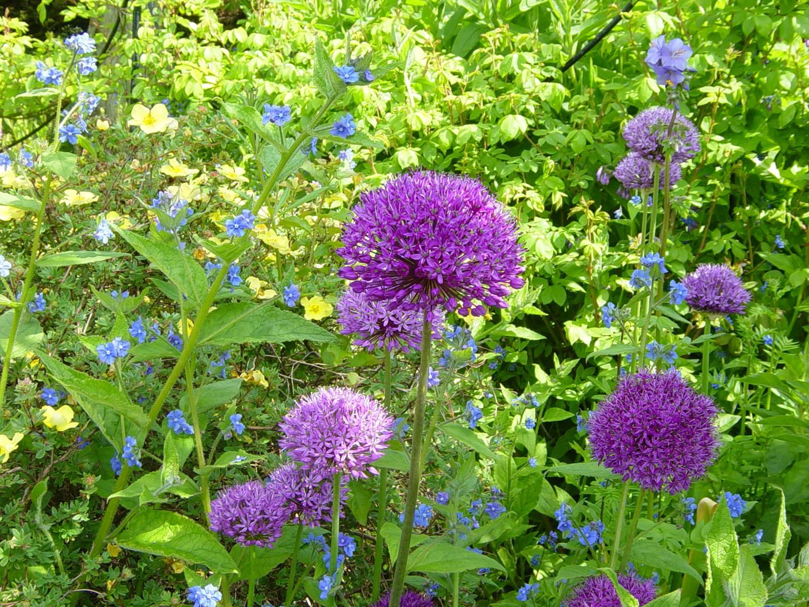 Kellie Garden Scotland (3)