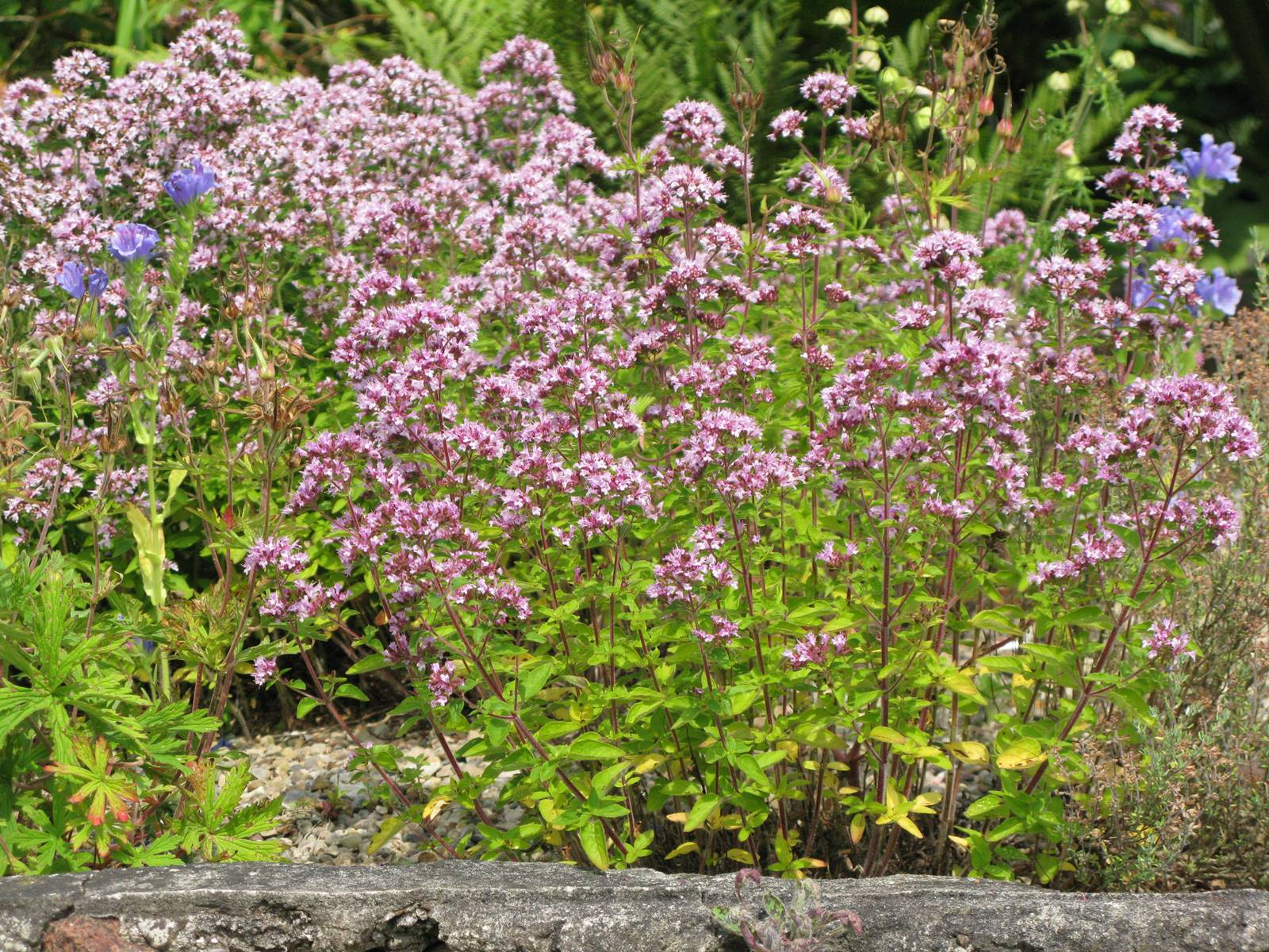 Chesters Walled Garden England (6)