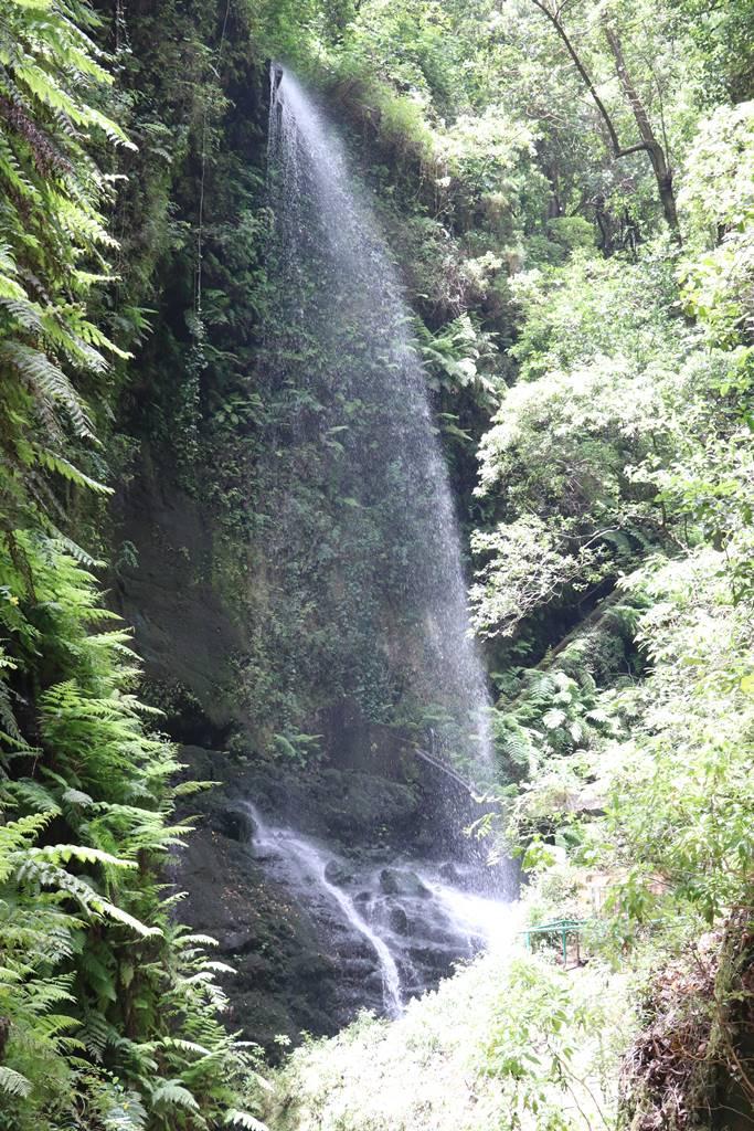 La Palma 15 forêt de laurier (1)