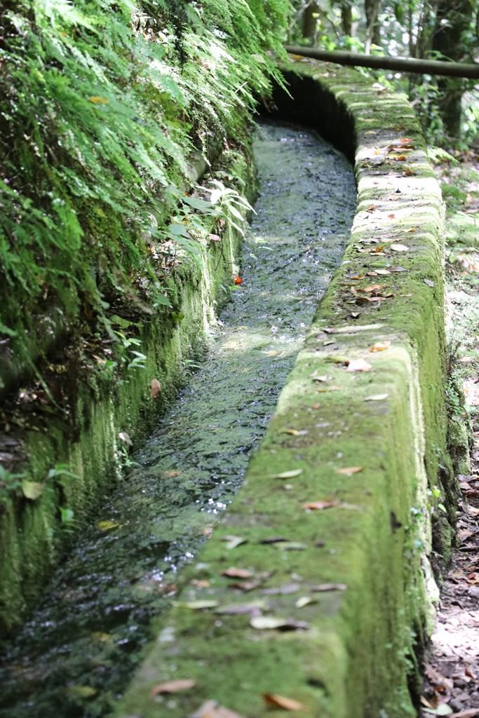 La Palma 15 forêt de laurier (4)
