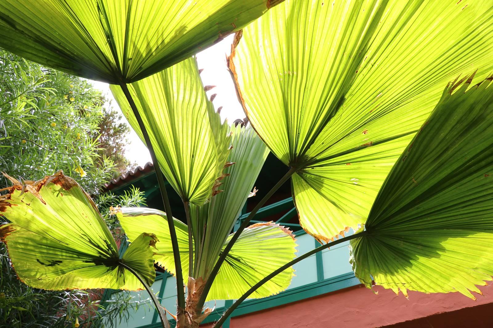 La Palma 35 végétation exotique (2)