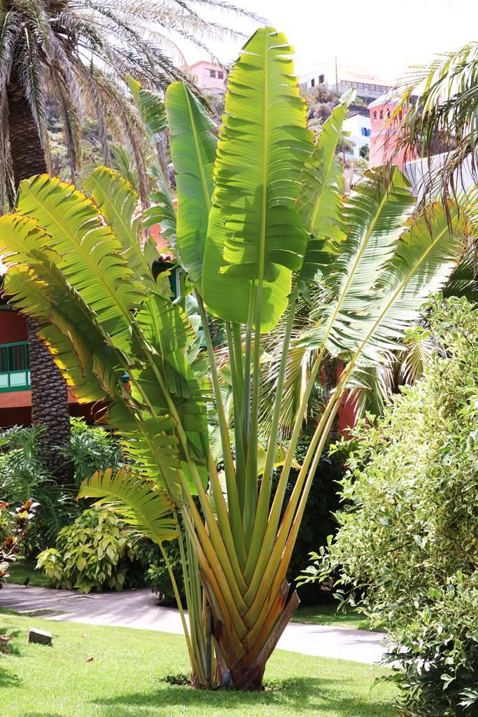 La Palma 35 végétation exotique (3)