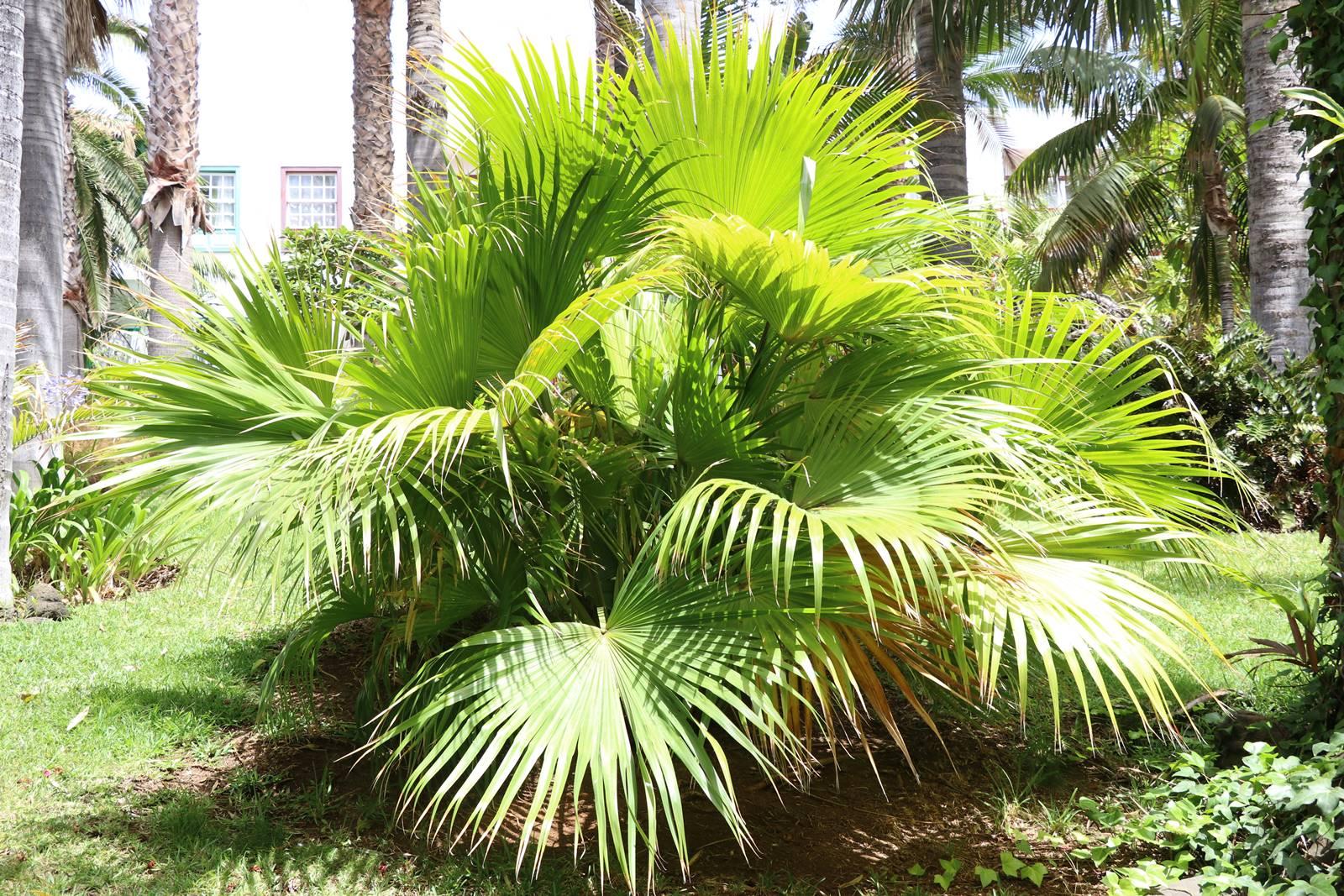 La Palma 35 végétation exotique (4)