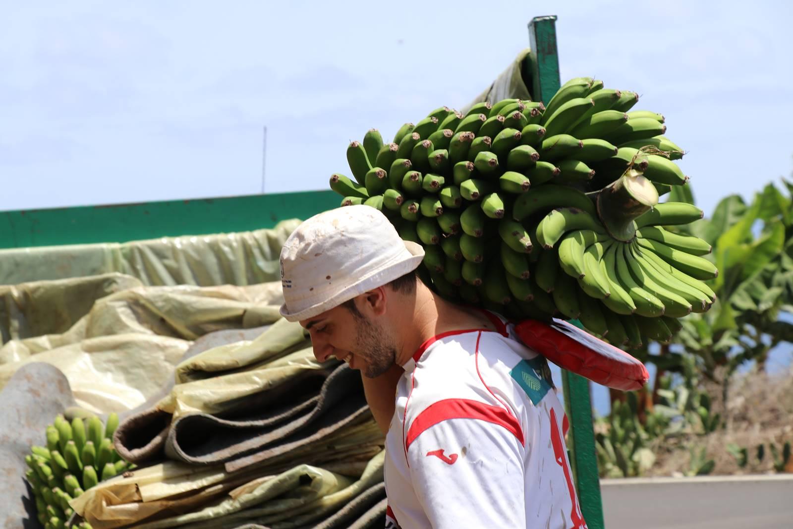 La Palma 9 bananeraies (1)