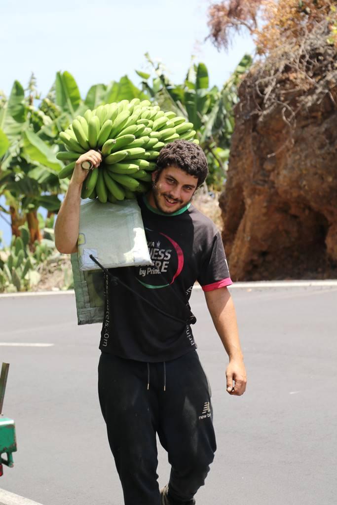 La Palma 9 bananeraies (2)