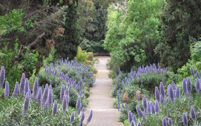 Les jardins de la Villa Hanbury
