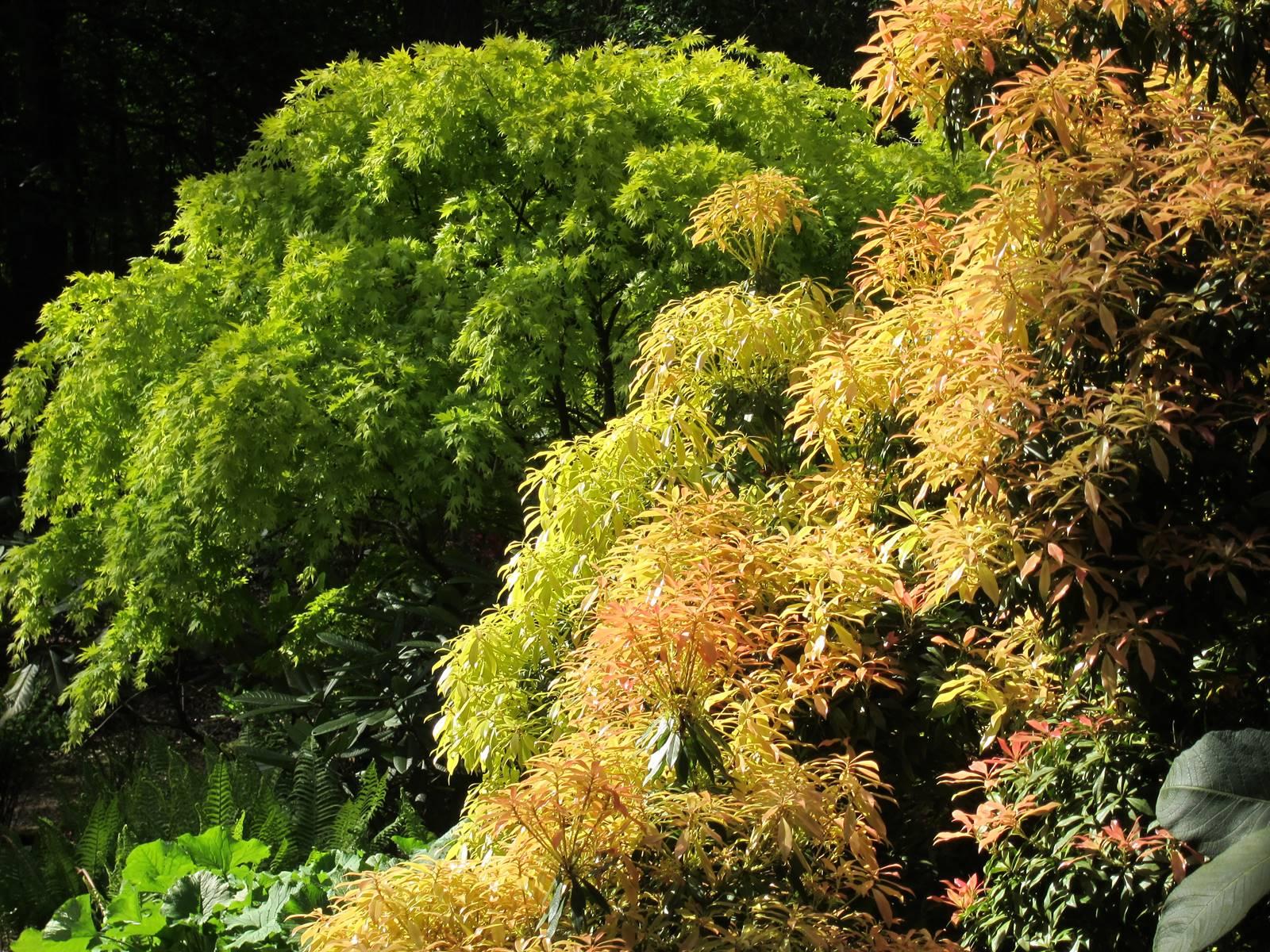Abbotsbury subtropical gardens (13)