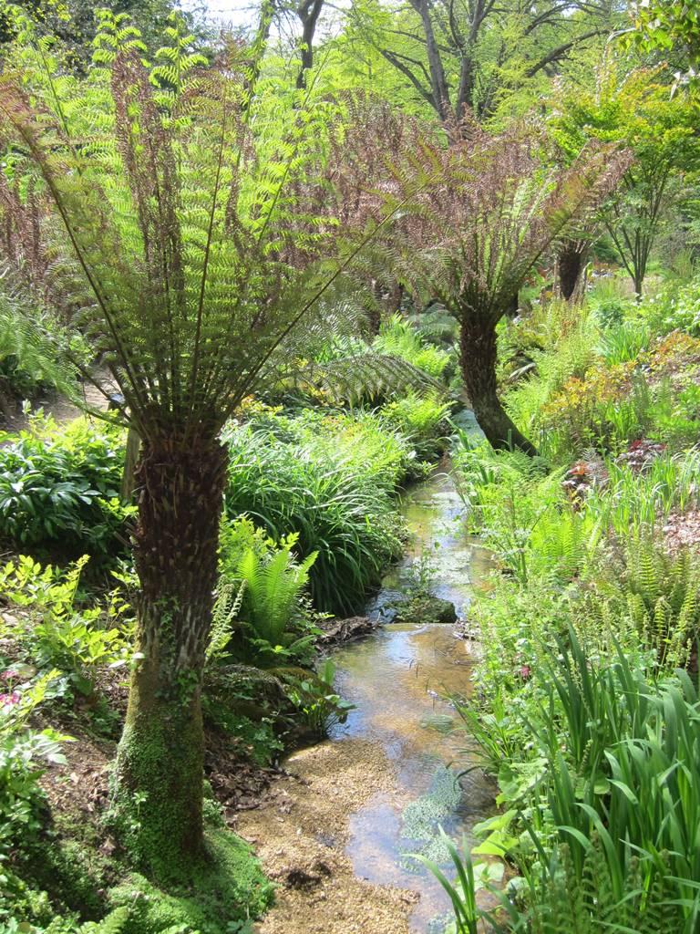 Abbotsbury subtropical gardens (16)