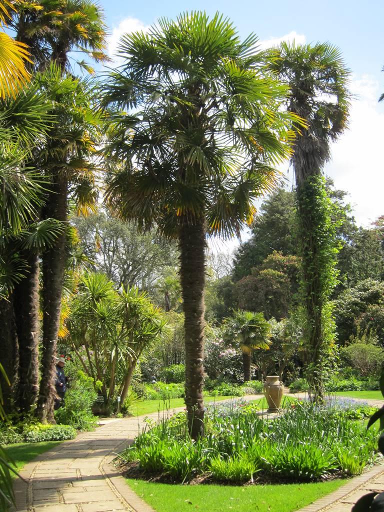 Abbotsbury subtropical gardens (19)