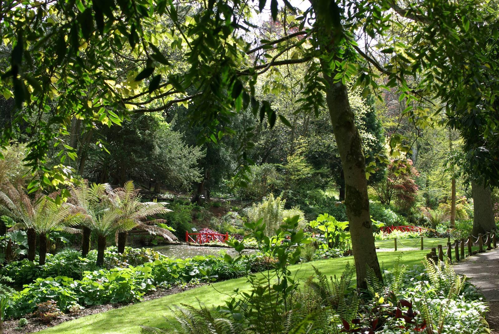 Abbotsbury subtropical gardens (23)