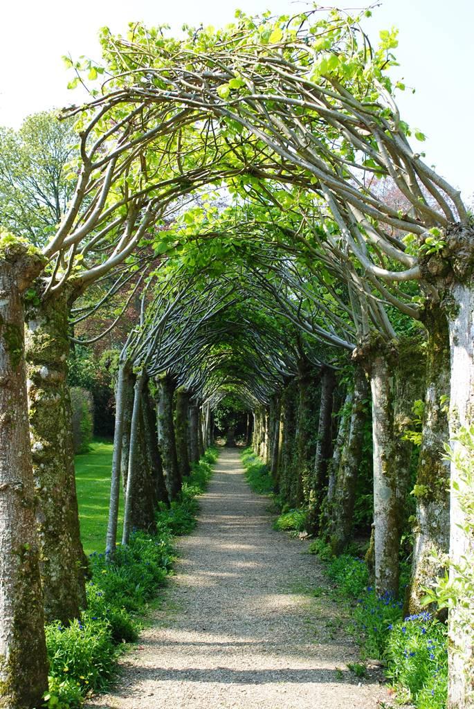 Athelmapton House & gardens (2)