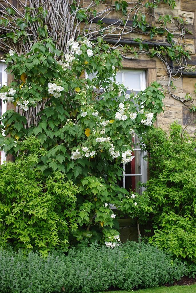 Renishaw Hall Gardens (12)